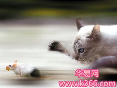《周公解梦》 猫捉鼠,主进大财.《周公解梦》   梦猫捕鼠.梦此主得财.